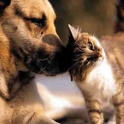 dog-cat-pets-250x250